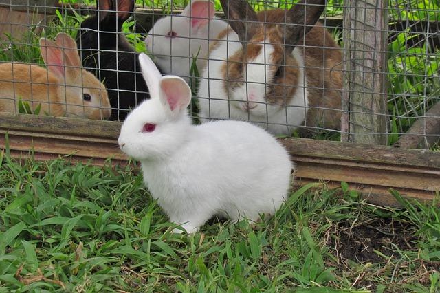 klec pro králíky